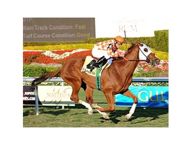 "Presious Passion will break from post 9 in the Dubai Sheema Classic. <br><a target=""blank"" href=""http://www.bloodhorse.com/horse-racing/photo-store?ref=http%3A%2F%2Fpictopia.com%2Fperl%2Fgal%3Fprovider_id%3D368%26ptp_photo_id%3D8814100%26ref%3Dstory"">Order This Photo</a>"