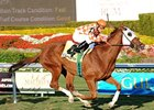 "Presious Passion repeats in the Mac Diarmida Stakes at Gulfstream Park.<br><a target=""blank"" href=""http://www.bloodhorse.com/horse-racing/photo-store?ref=http%3A%2F%2Fpictopia.com%2Fperl%2Fgal%3Fprovider_id%3D368%26ptp_photo_id%3D8814100%26ref%3Dstory"">Order This Photo</a>"