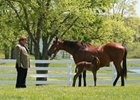 Edward Evans, left, in 2006, with broodmare Kobla and Quality Road, who had been foaled less than 24 hours earlier.
