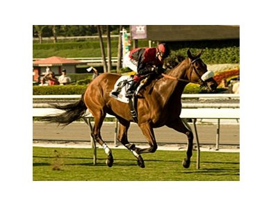 "Gotta Have Her rules the hillside turf course in the Sen. Ken Maddy Handicap.<br><a target=""blank"" href=""http://www.bloodhorse.com/horse-racing/photo-store?ref=http%3A%2F%2Fpictopia.com%2Fperl%2Fgal%3Fprovider_id%3D368%26ptp_photo_id%3D8560776%26ref%3Dstory"">Order This Photo</a>"