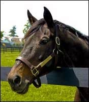 Old Friends Welcomes Super Derby Winner Wallenda