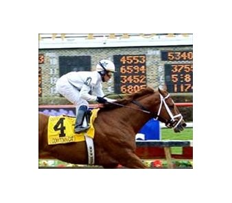 Illinois Derby winner Cowtown Cat, 1.5 million auction horse