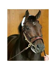 "Zanjero<br><a target=""blank"" href=""http://www.bloodhorse.com/horse-racing/photo-store?ref=http%3A%2F%2Fpictopia.com%2Fperl%2Fgal%3Fprovider_id%3D368%26ptp_photo_id%3D1118125%26ref%3Dstory"">Order This Photo</a>"