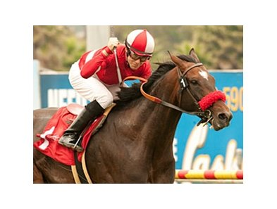 Acclamation won the Charles Whittingham Memorial Handicap in 2010 and 2011 (shown).