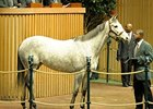 Miss Isella brought the Keeneland January horses of all ages sale's highest price of $1,085,000.
