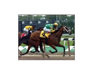 "Grade I winner Cotton Blossom will be one of the big names offered at the Fasig-Tipton Kentucky November mixed sale.<br><a target=""blank"" href=""http://www.bloodhorse.com/horse-racing/photo-store?ref=http%3A%2F%2Fpictopia.com%2Fperl%2Fgal%3Fprovider_id%3D368%26ptp_photo_id%3D1398830%26ref%3Dstory"">Order This Photo</a>"
