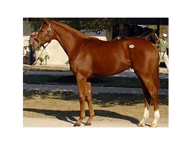 Favorite Gal, a Hard Spun filly out of champion Hollywood Wildcat is the most expensive horse sold so far during the Fasig-Tipton Kentucky fall yearling sale.