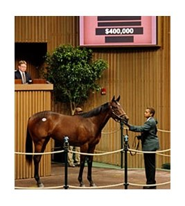 Hip 44, a filly by Lemon Drop Kid, sold for $400,000 at the Keeneland April Sale.