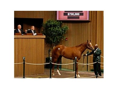 Hip 123 by Majestic Warrior brought a high bid of $700,000.