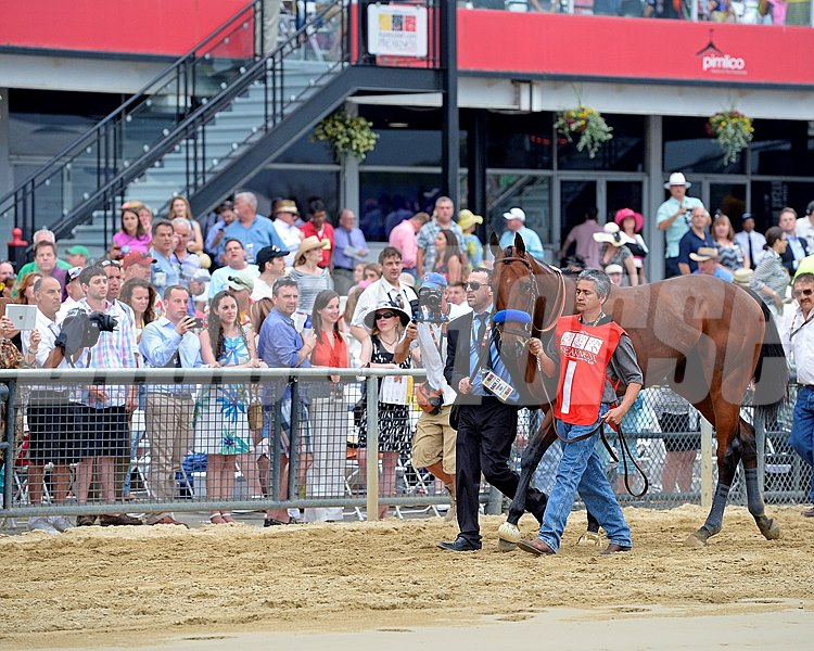 Caption:  walkover to indoor paddock American Pharoah with Victor Espinoza wins the Preakness Stakes (gr. I) at Pimlico on May 16, 2015. Preakness 1 image 206 Photo by Anne M. Eberhardt