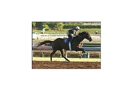 Pleasantly Perfect, working out at Santa Anita on Monday.