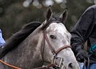 "Conveyance<br><a target=""blank"" href=""http://www.bloodhorse.com/horse-racing/photo-store?ref=http%3A%2F%2Fpictopia.com%2Fperl%2Fgal%3Fprovider_id%3D368%26ptp_photo_id%3D8931731%26ref%3Dstory"">Order This Photo</a>"