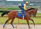 American Pharoah at Churchill Downs May 25.