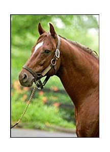Coronado's Quest, was standing at stud in Japan at the time of his death.