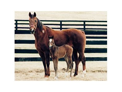 Amelia Bearhart with her 1996 filly.