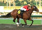 Whywhywhy's son Nownownow took the San Fernando Stakes on January 17.