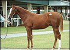 Tale of the Cat colt topped OBSC sale session.