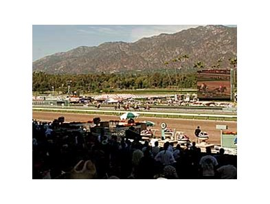 The crowd at the 2007 Cal Cup