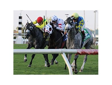 "Court Vision (center, white silks) was awarded the Gulfstream Park Turf after the disqualification of Take the Points (right).<br><a target=""blank"" href=""http://www.bloodhorse.com/horse-racing/photo-store?ref=http%3A%2F%2Fpictopia.com%2Fperl%2Fgal%3Fprovider_id%3D368%26ptp_photo_id%3D8781837%26ref%3Dstory"">Order This Photo</a>"