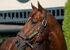 Distorted Humor is the sire of the promising colt, Drosselmeyer.