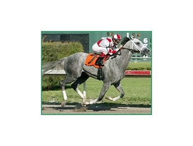 Value Plus among this year's prominent gray Derby hopefuls.