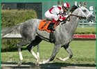 Value Plus among the many gray hopefuls on Derby road.