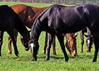 Report of Mares Bred Due Aug. 1