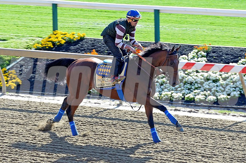 Caption:  American Pharoah on the track for the first time at Pimlico.