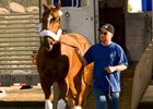 Curlin is on his toes as he steps off the van Sept. 28 at Santa Anita Park.