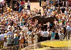 Fans Come Out Early to See Zenyatta Statue