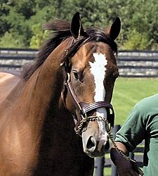 Harlan's Holiday Colt Sells for $250,000