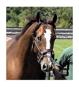 Harlan's Holiday, sire of sold colt.