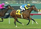 Sligo Bay, winning the Hollywood Turf Cup.
