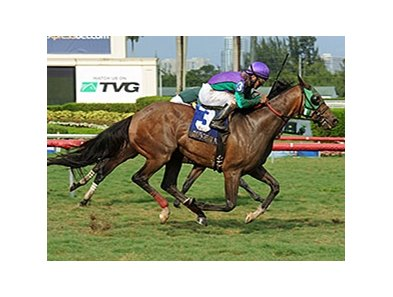 Rerun wins the Miami Mile.