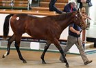 Meshardal, a son of Shamardal, commanded the second session's top price of 220,000 guineas.