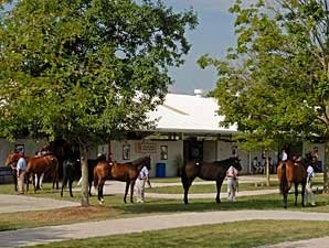 Fasig-Tipton July Sale Has 303 Yearlings