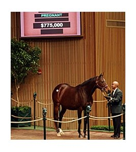 Spice Island, hip 153, in the Keeneland January Sale.