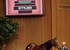 Spice Island Fetches $775,000 at Keeneland