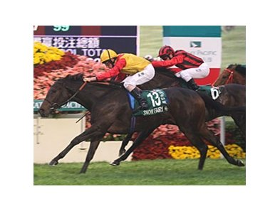 Snow Fairy in the Hong Kong Cup.
