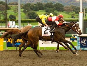 Beltene Cinches Sunshine Oaks Upset