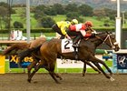 "Beltene outfights Hooh Why to take the Sunshine Millions Oaks.<br><a target=""blank"" href=""http://www.bloodhorse.com/horse-racing/photo-store?ref=http%3A%2F%2Fpictopia.com%2Fperl%2Fgal%3Fprovider_id%3D368%26ptp_photo_id%3D7536703%26ref%3Dstory"">Order This Photo</a>"