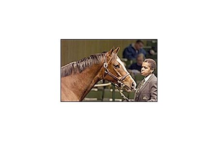 La Galerie, sold for $800,000 Monday at Keeneland January mixed sale.