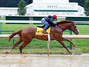 Shackleford Works Well; Romans Hopes to Enter