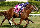 Twilight Meteor will try to break a seven race losing skid in the Dec. 26 Sir Beaufort (gr. IIIT).