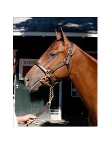 Strom Cat colt leads off Tuesday session of Saratoga sale.