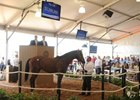 Big Brown Colt Commands $1.3 Million at F-T