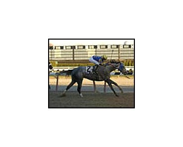 Evening Attire, winning the Queens County Handicap.