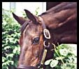 John Henry, in a 2002 photo at the Kentucky Horse Park.