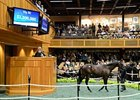Street Cry Colt Fetches $1.2 Million at F-T