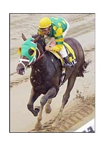Boston Bull wins the Cowdin at Belmont on Sunday.